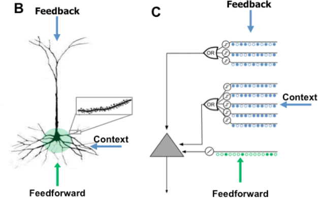 "New HTM paper – ""Why Neurons Have Thousands of Synapses, A Theory of Sequence Memory in Neocortex"""